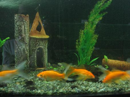 18 Fish