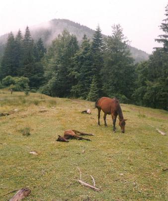 06-horses