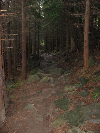 Ліс дрімучий