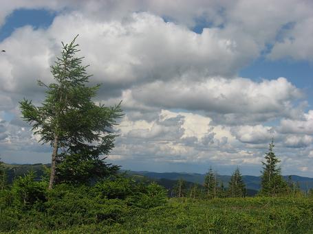 Чарівні хмаринки і малі ялинки на вершині Великої Кознєски