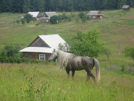 Спокійний сільський пейзаж
