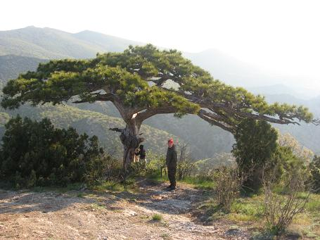 09-tree