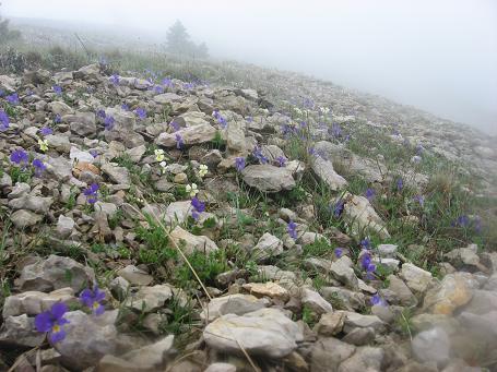 14-violets