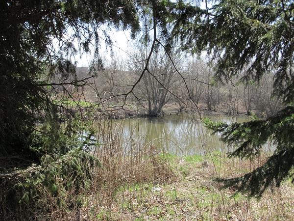 Озерце лісове в Осоївці