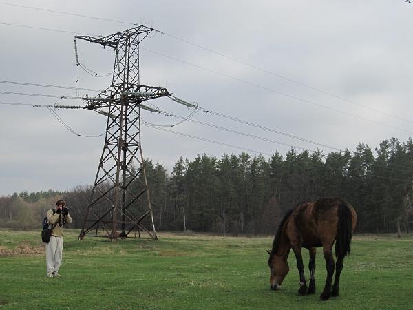 Фотографування коня