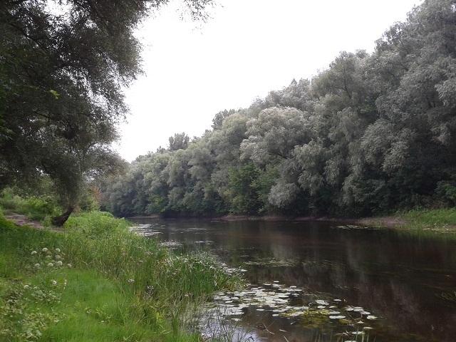 Річка Сула