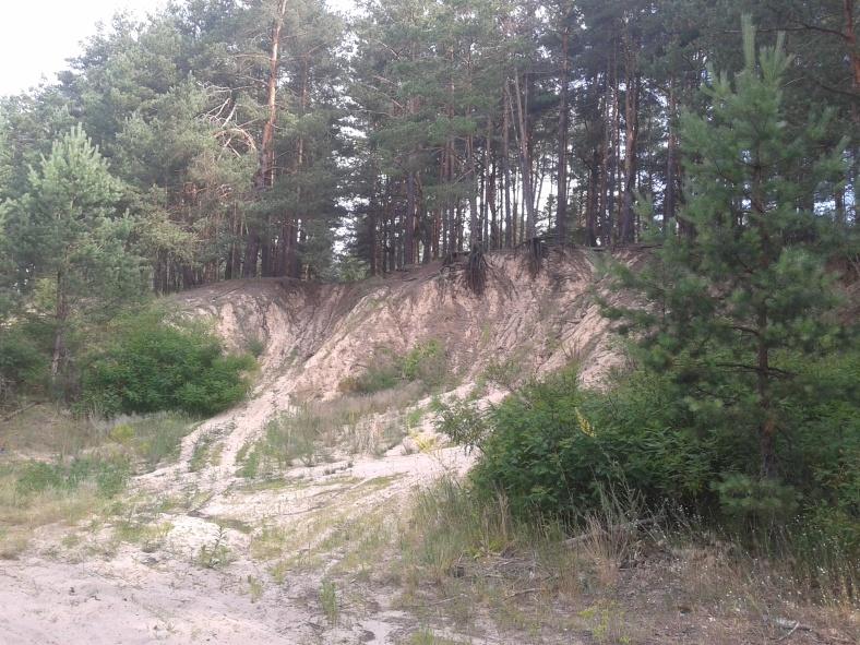 Підґрунтя лісових доріг