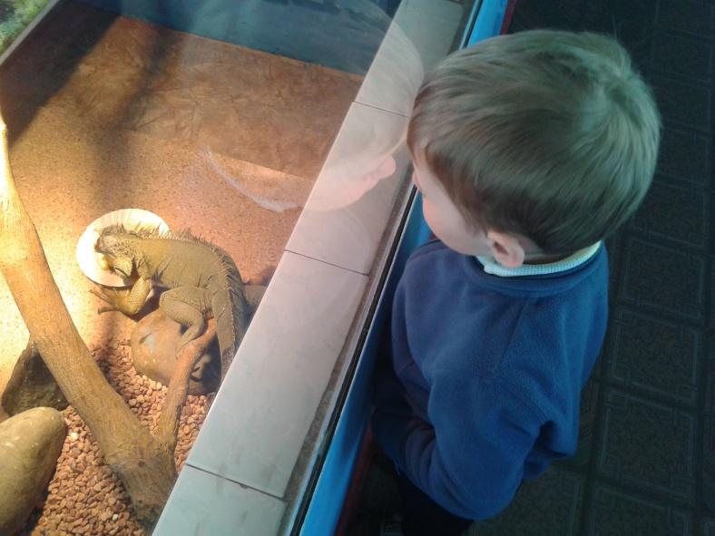 Спостереження за ігуаною