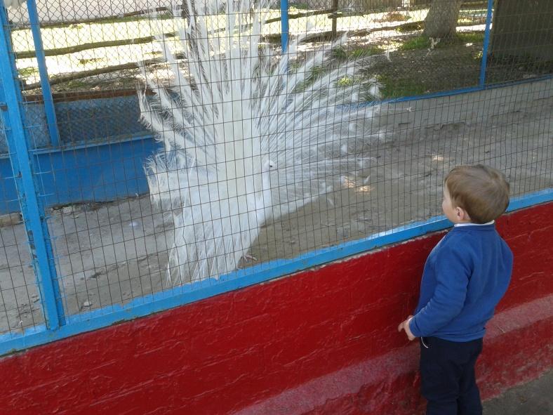 Власник найбільшого хвоста Менського зоопарку