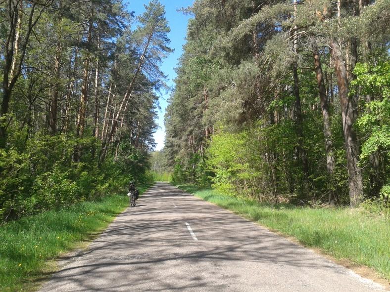 Ранковий затишок лісової дороги