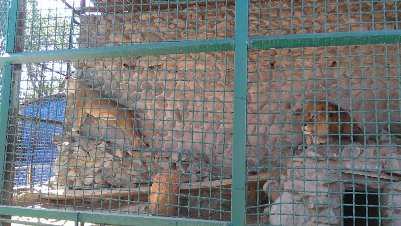Леви на чатах навіть за ґратами