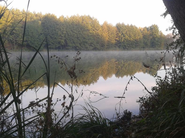 Осінній ранок над лісовим озером