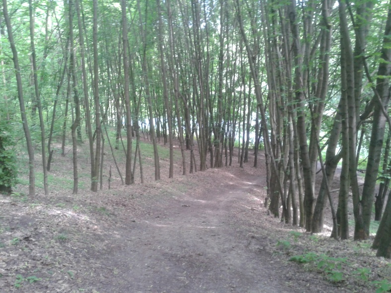 Просвіти між деревами – то вже плесо озера. Тільки б не скотитися до нього крутосхилом!