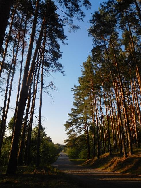 70 Pines.jpg
