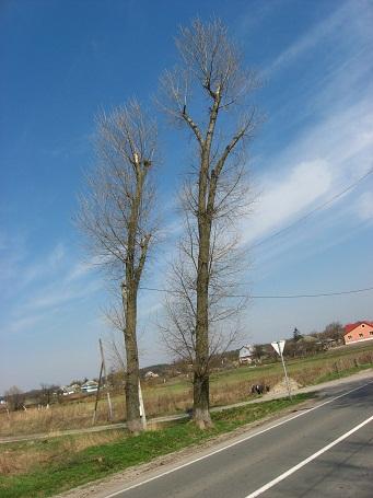 109 trees