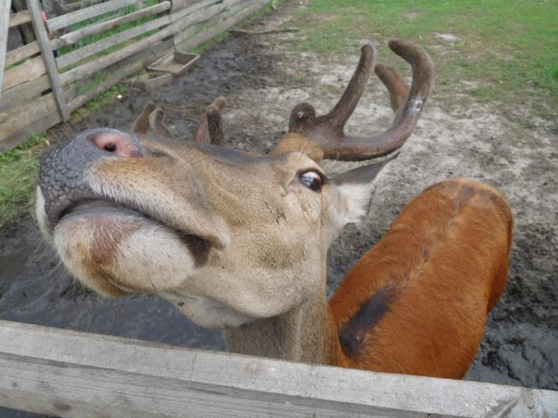 18 deer